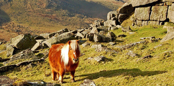 Country Roads of Wales, Devon and Cornwall  Tours, couples and flights holiday experience